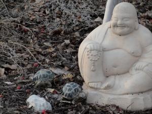2:19:13 Buddha and his turtles