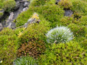 moss friends close up