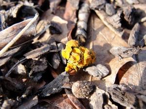 fallen lichen