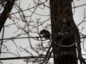 squirrel on 2/8/13