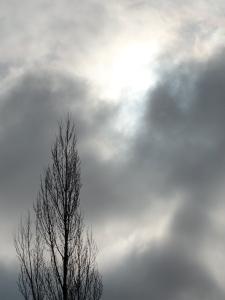 2:9:13 poplar sun