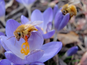 3:11:13 two bees quite nice