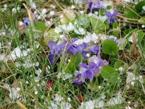 3:21:13 violets snow