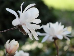 4:3:13 busy magnolia