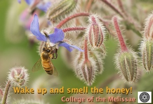 Wake up and smell the honey jpeg crop