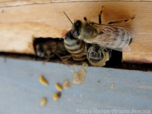1:11:14 bees signature