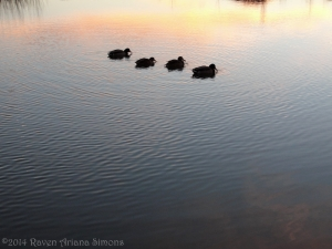 1:13:14 ducks in water at sunset sig