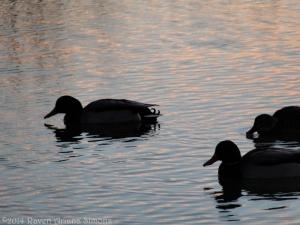 1:13:14 sunset duck sig