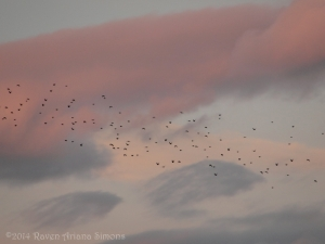 1:13:14 sunset starlings sig
