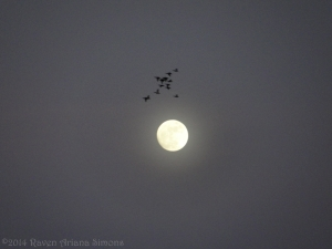 1:14:14 duck moon sig