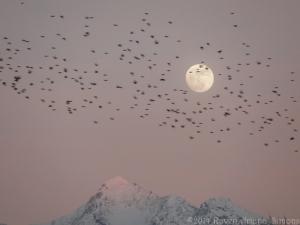 1:14:14 pick starling moon sig