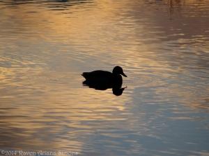 1:15:14 duck sunset sig