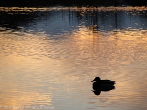 1:15:14 impressionistic duck sig