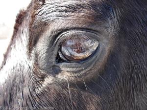 1:17:13 horse eye close sig