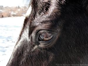 1:17:13 horse eye sig