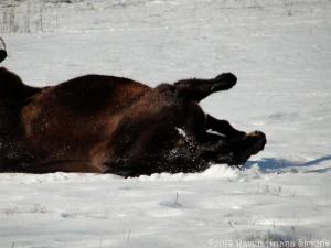 1:17:13 horse roll snow sig