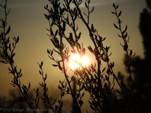 1:17:13 setting sun sig