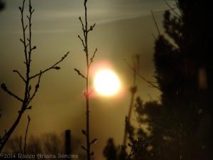 1:17:13 sunset twigs sig