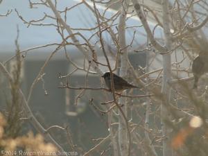 1:19:14 sparrow sig