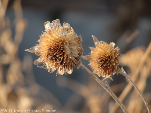 1:19:14 sunflowers sig