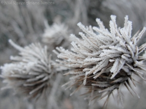 1:21:14 frost on thistles sig