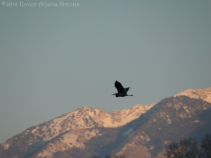 1:23:14 flying heron sig