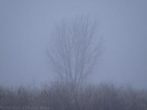 1:23:14 fog:smog sig