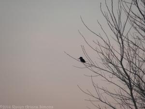 1:24:14 kingfisher sig