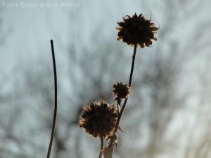 1:25:14 sunflower 1 sig