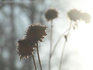 1:25:14 sunflowers sig