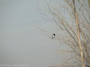 1:28:14 kingfisher tree sig