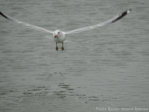 1:29:14 taking flight sig