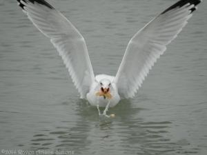 1:29:14 wild seagull sig