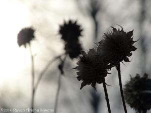 1:31:14 sunflowers sig