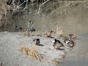 2:10:14 Roman ducks sig