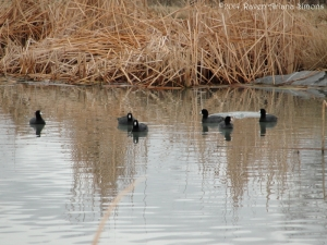 2:13:14 posed coots sig