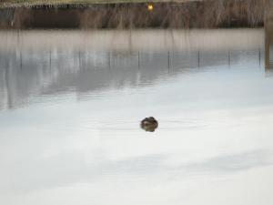 2:13:14 tiny duck 1 sig