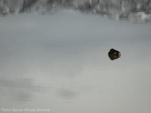 2:13:14 tiny duck sig