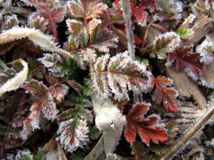 2:17:14 red leaf ice crystals sig