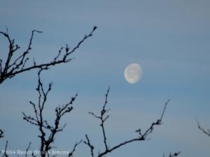 2:18:14 waning moon rowan sig