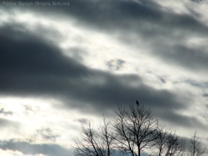 2:22:14 clouds with bird on tree sig