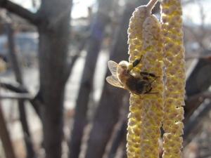2:23:14 pollen digger