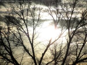 2:24:14 tree w:sun sig