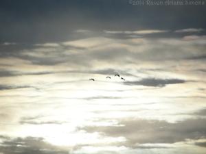 2:3:14 sunset geese sig