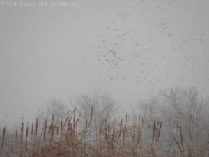 2:4:14 birds in the snow 1 sig