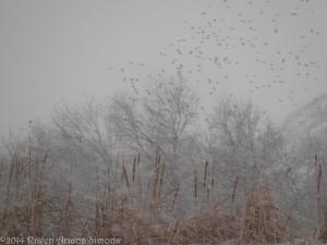 2:4:14 birds in the snow sig