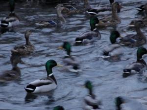 2:6:13 ducks one clear