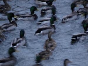 2:6:13 ducks