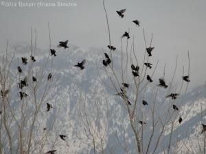 2:6:14 landing starlings sig