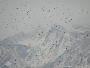 2:6:14 starlings sig